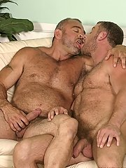 Two horny bears suck eachothers dicks and rub eachothers hairy chests