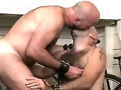 Bear gays lick and suck each other