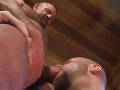 Old hairy faggot sucked by bear man
