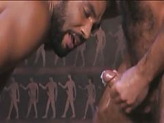 Bear Arabian gay guy cums in wild orgy
