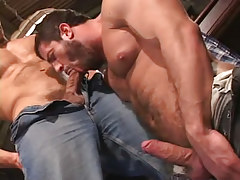 Bear faggot sucking appetizing cock