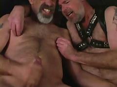 Mellow bear gays jizz by turns
